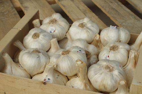 garlic garlic elephant bulb