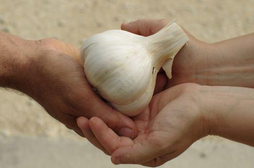 garlic garlic elephant food