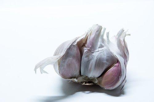 garlic  tuber  medicinal plant