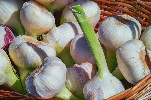 garlic  fresh  herb