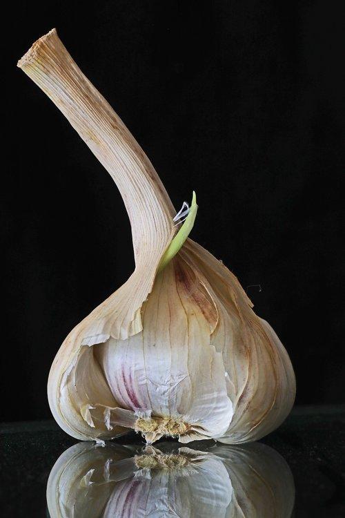 garlic  food  substantial