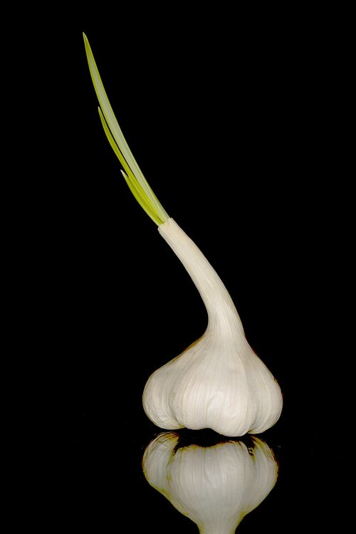 garlic  sharp  nutrition