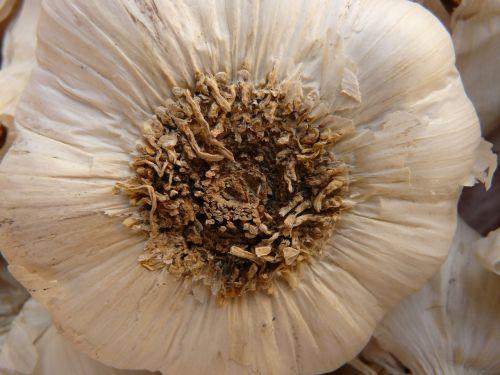 garlic sharp aromatic