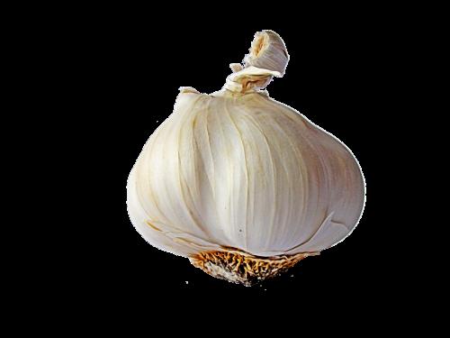 garlic head of garlic vegetables