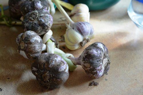 garlic spices spice