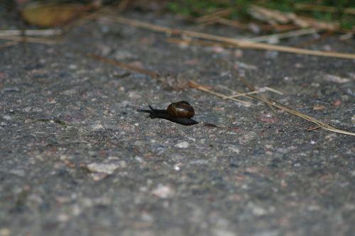 gastropoda snail small