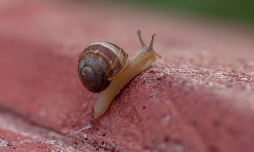 gastropods snail slugs
