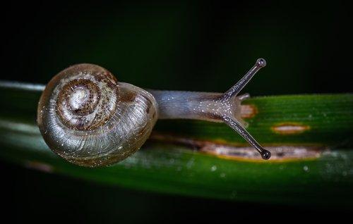 gastropods  clam  macro
