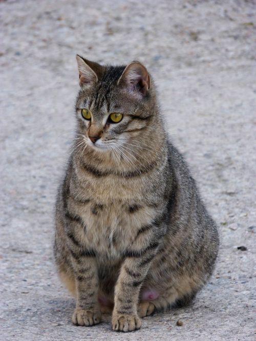 gata cat feline