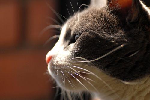 gata look street cat