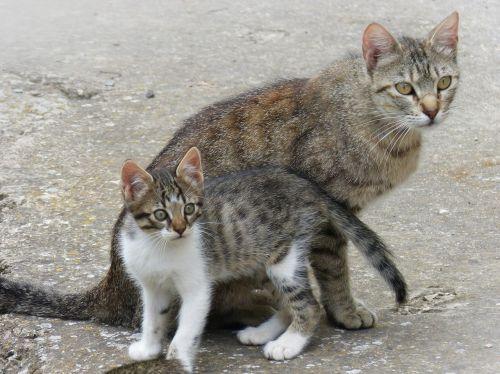 gata kitten mother and son