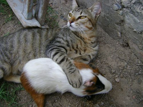 gata friendship animals