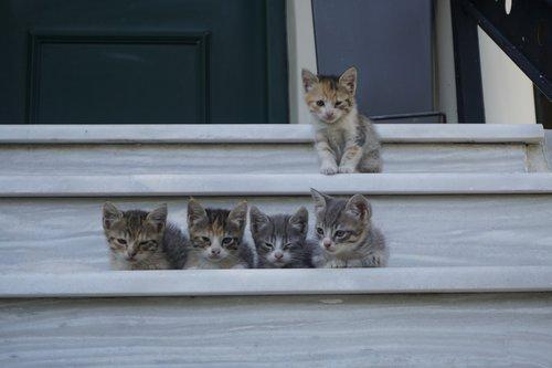 gates  babies  feline