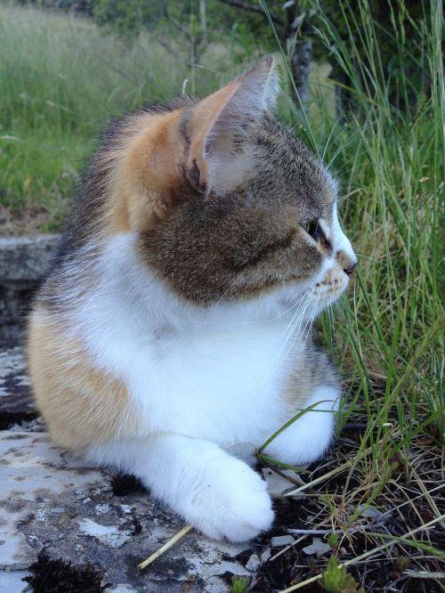 gatta profile muzzle