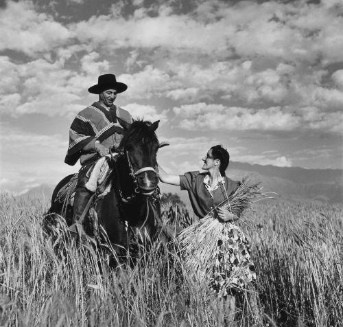 gaucho reiter horse