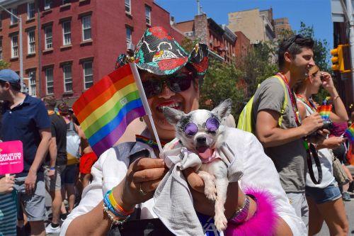 gay pride pride fest dog