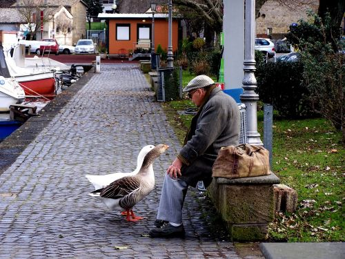 geese dialogue couples