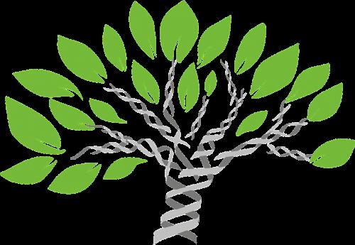gene tree tree of life evolution