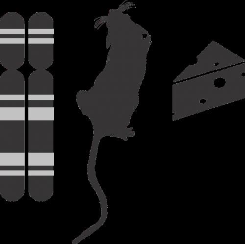 genotype phenotype environment icon g2p genotype