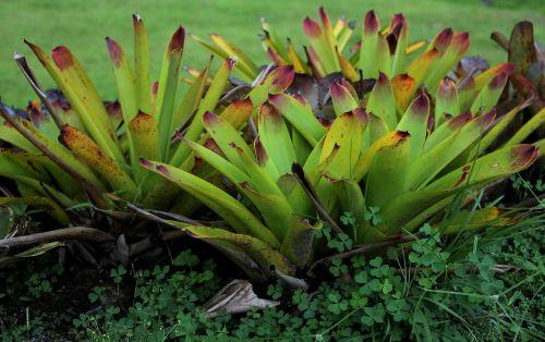 genus exotic plant exotic botany