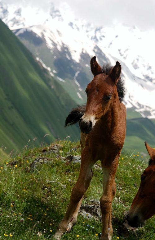 georgia caucasus offspring