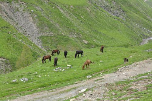 georgia horses the horse