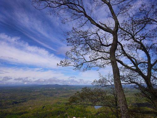 georgia mountains trees