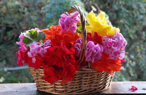geranium petunia balcony plants