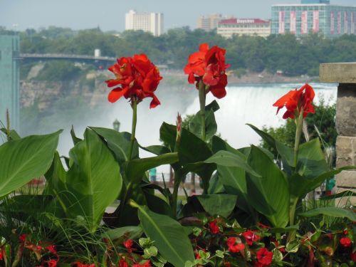 Geraniums At Niagara Falls