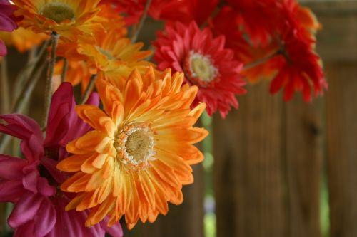 gerber gerber daisy bouquet