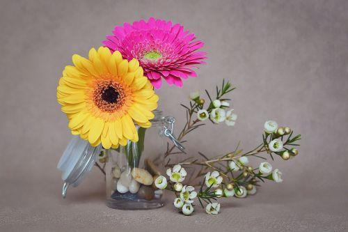 gerbera flowers pink