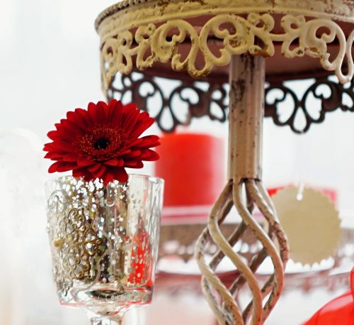 gerbera glass stand