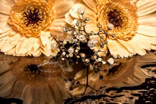 gerbera gypsophila flowers