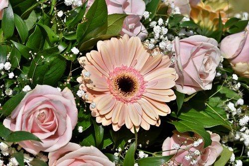 gerbera  arrangement  floral arrangement