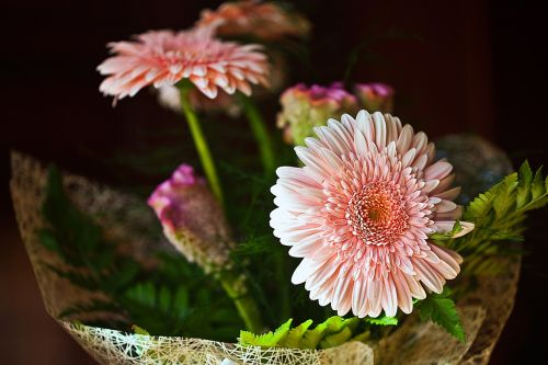 gerberas flowers cut flowers