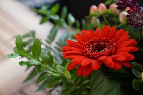gerbie flower red