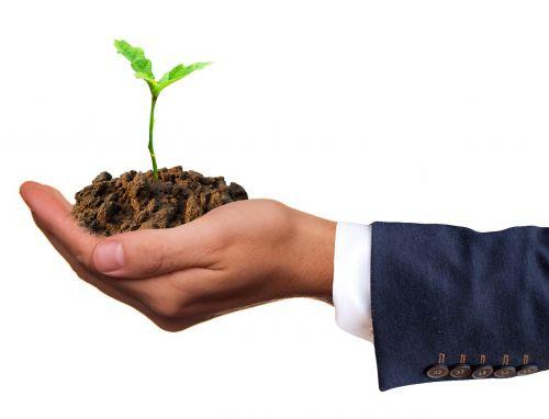 germ plant seedling
