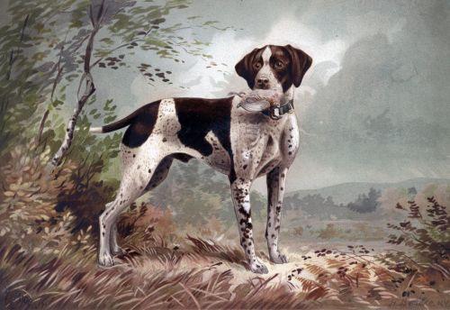 German Pointer Dog Painting