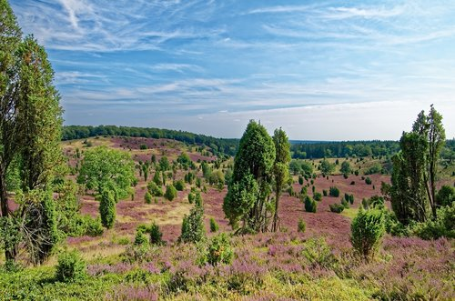 germany  lüneburg heath  heathland