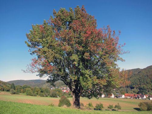 Vokietija,kraštovaizdis,ruduo,kritimas,kalnai,miškas,medžiai,miškai,laukai,kaimas,pastatai,gamta,lauke,vaizdingas,kaimas,Šalis,kaimas,spalvinga,lapija