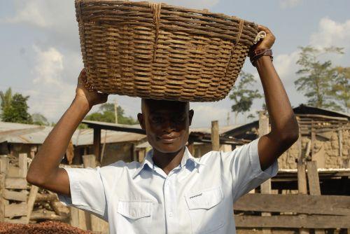 ghana cocoa agriculture