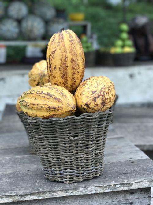 ghana africa cocoa