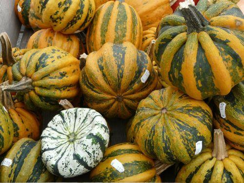 giant pumpkins pumpkin pumpkin art