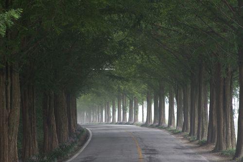 gil wood meta sequoia trees