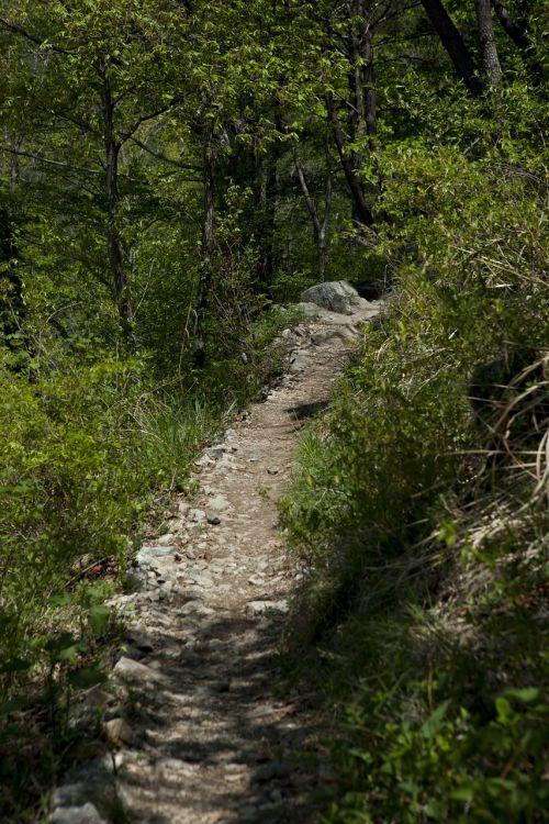 gil mountain trail tracking