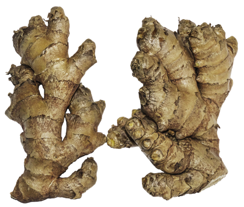ginger rhizome ginger root
