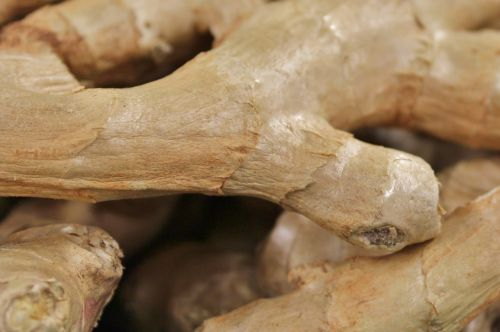 ginger tuber healthy