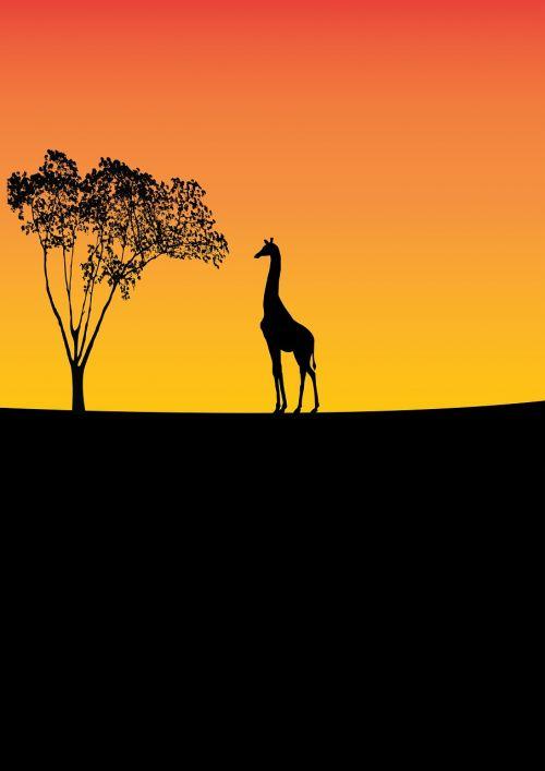 giraffe wildlife tree