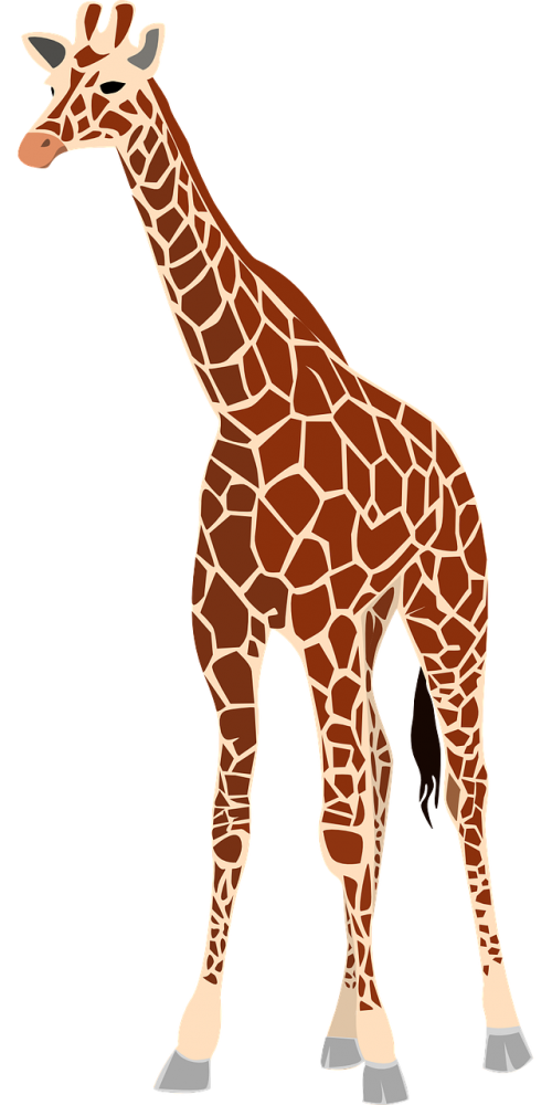 giraffe mammal animal
