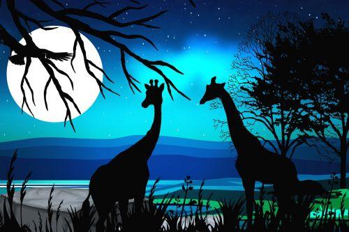 giraffes silhouette safari